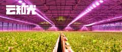 """60天实现""""植物工厂"""",植物照明为何突然火了?!"""