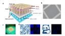 南京大学团队在与Micro LED相关的二维半导体领域取得关键突破